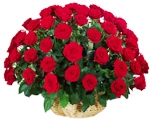 Send flowers to Bangalore, send cakes to Bangalore